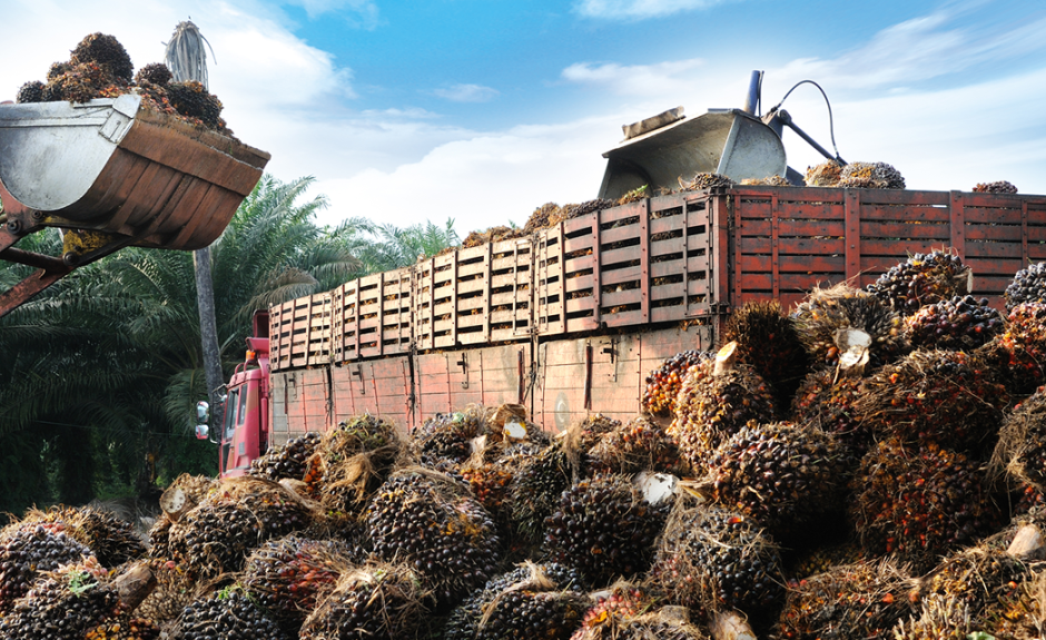 The Palm Oil Industry